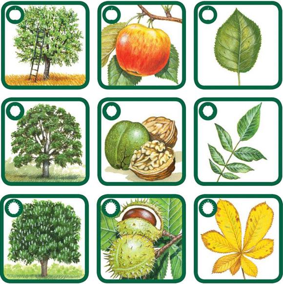 Znáš naše stromy ?